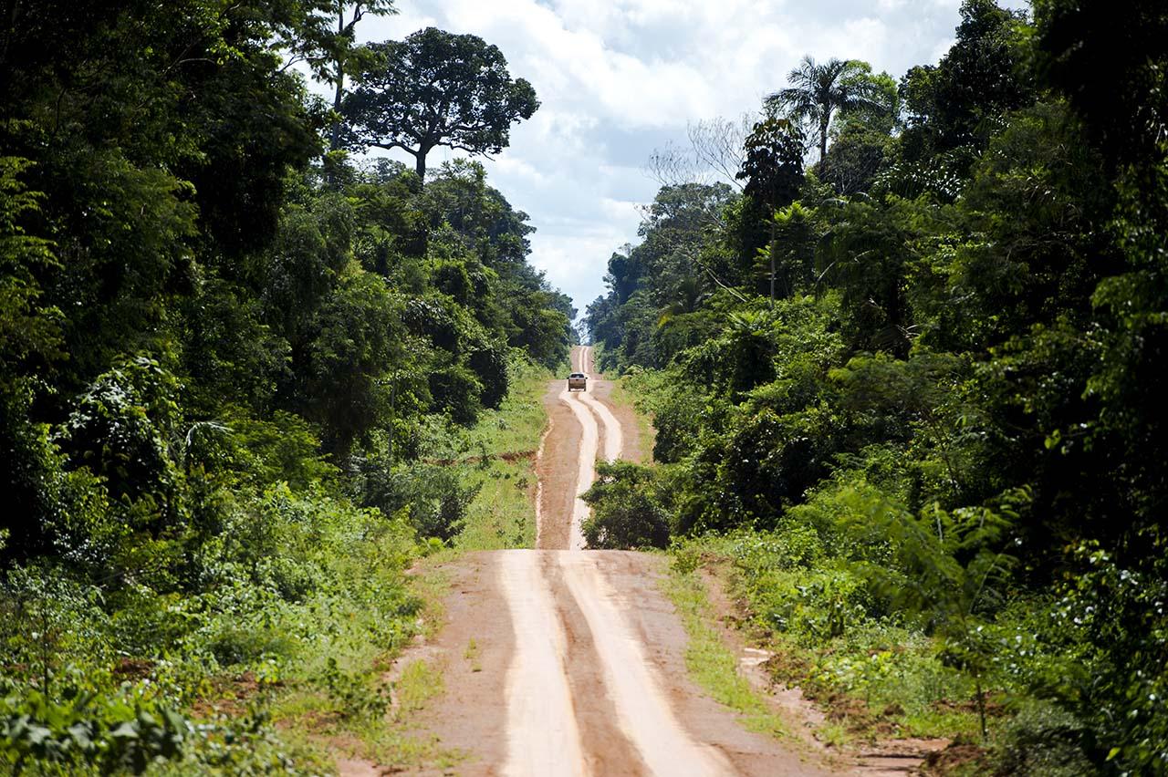 estrada na floresta