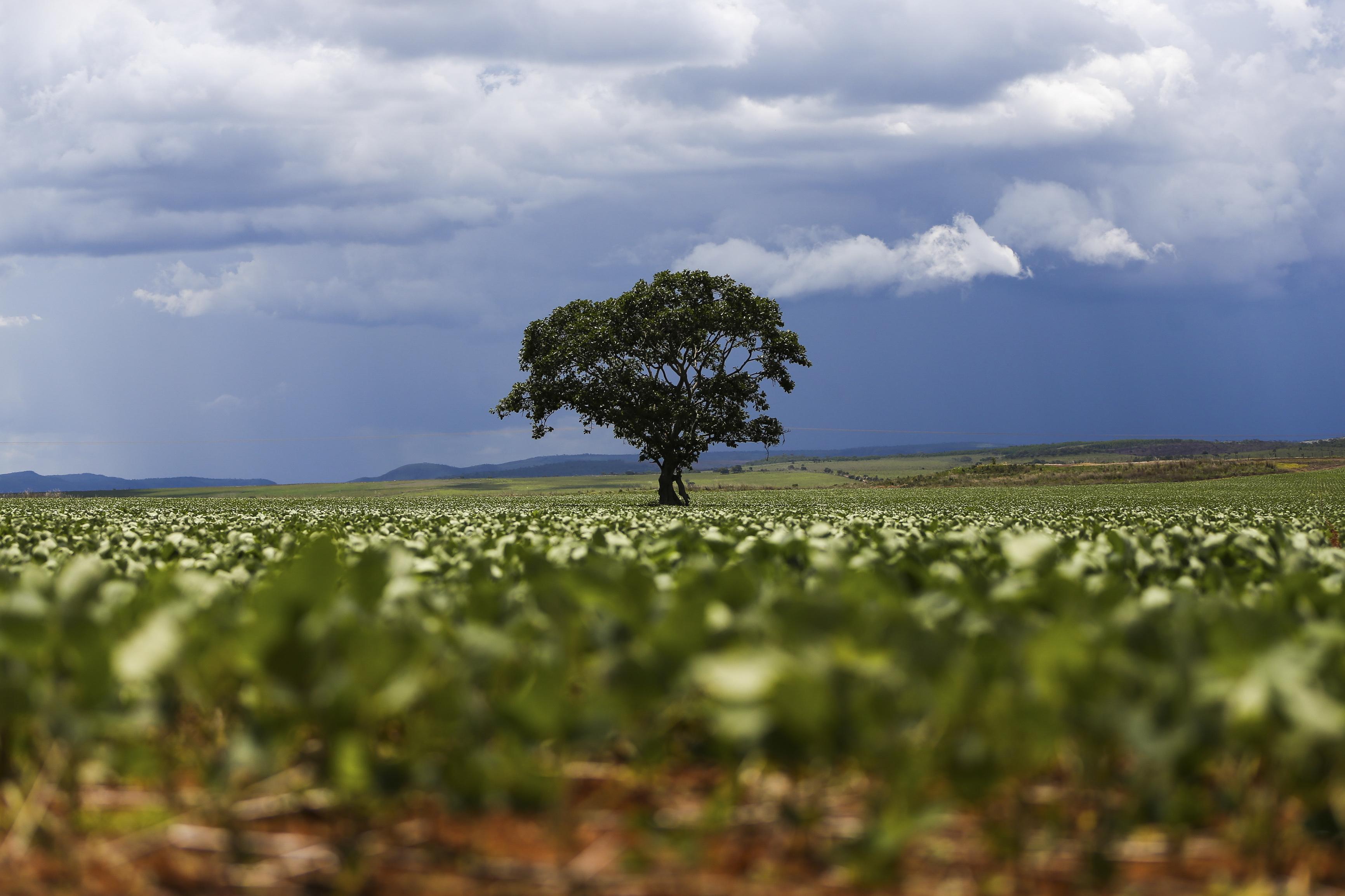 Alto Paraíso (GO) - Plantação de soja em área do  município de Alto Paraíso (Marcelo Camargo/Agência Brasil)