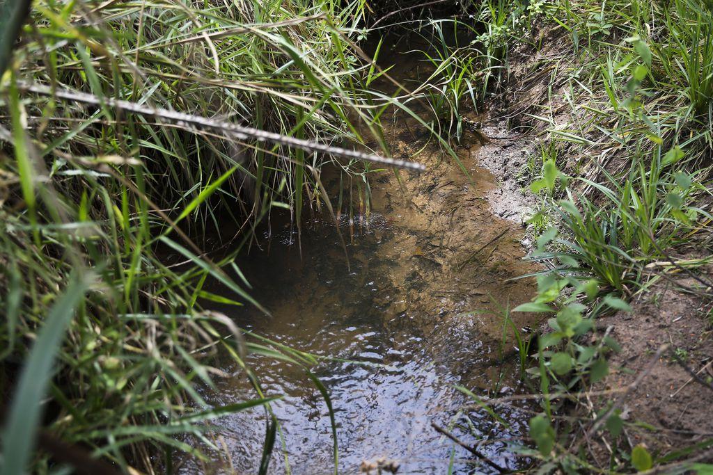 Como a água brotou de novo no Cerrado